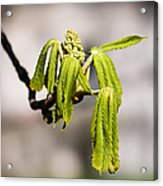 Vitalization - Featured 2 Acrylic Print