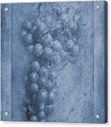 Vitis Cyanotype Acrylic Print