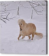 Viva Zapata Contratercero Dances In The Snow Acrylic Print