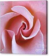 Vivacious Pink Rose 5 Acrylic Print
