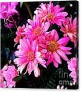 Vive Le Pink People Acrylic Print