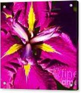 Vivid Iris Acrylic Print