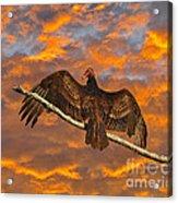 Vivid Vulture Acrylic Print by Al Powell Photography USA