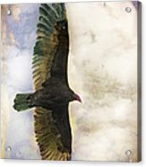 Vulture In Color Acrylic Print