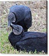Vulture Love Acrylic Print