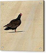 Vulture Road Acrylic Print