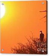 Vulture Sunset Silhouette Acrylic Print