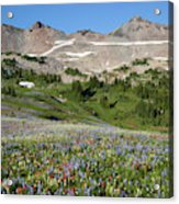 Wa, Goat Rocks Wilderness, Wildflower Acrylic Print