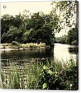 Waccamaw River Acrylic Print