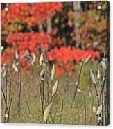 Wachusett Meadows 4 Acrylic Print