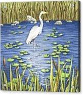 Wading And Watching Acrylic Print