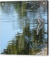 Wading Bird Acrylic Print