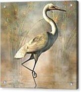 Wading Egret Acrylic Print