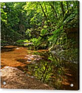 Wading In The Creek Acrylic Print