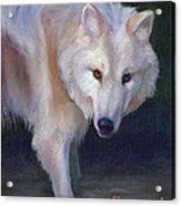 Wading Wolf Acrylic Print