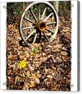 Wagon Wheel Daffodil Acrylic Print