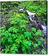 Wahkeena Falls In The Columbia River Gorge Acrylic Print