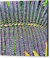 Waikamoi 32 Acrylic Print