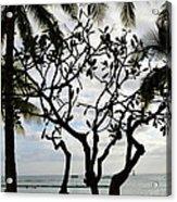 Waikiki Beach Hawaii Usa Acrylic Print