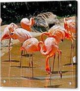 Waikiki Flamingos Acrylic Print