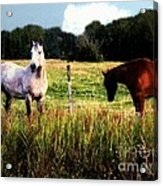 Waiting For Apples Acrylic Print