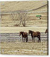 Waiting For Spring Acrylic Print by Joe McCormack Jr