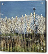 Waiting For You Acrylic Print by Ellen Cotton