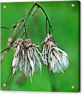 Waiting On The Wind Acrylic Print