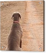 Waiting Patiently Acrylic Print