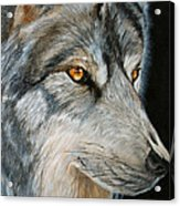 Waiting Wolf Acrylic Print