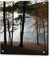 Walden Pond In Autumn Acrylic Print by Sheila Savage