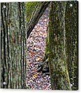 Walk Among The Trees Acrylic Print