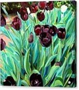 Walk Among The Tulips Acrylic Print