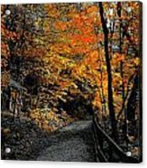 Walk In Golden Fall Acrylic Print