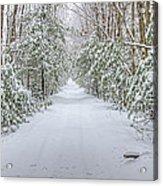 Walk In Snowy Woods Acrylic Print