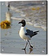 Walk On The Beach Acrylic Print by Candice Trimble