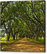 Walk With Me Acrylic Print by Steve Harrington
