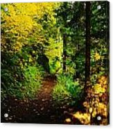 Walking An Autumn Path Acrylic Print