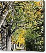 Walking Down Senators Highway Acrylic Print