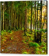 Walking In A Scottish Highland Wood Acrylic Print by Mark E Tisdale