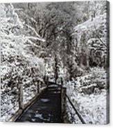 Walking Into The Infrared Jungle 1 Acrylic Print