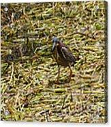 Walking On The Reeds Acrylic Print
