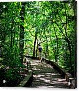 Walking The Path  Acrylic Print
