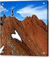 Walking The Ridge Acrylic Print