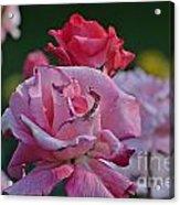 Walking Through The Rose Garden Acrylic Print