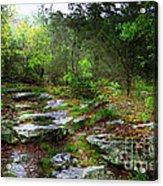 Walking With Light Acrylic Print