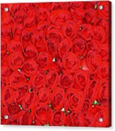 Wall Of Red Roses Acrylic Print