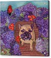 Wallace In The Garden Acrylic Print