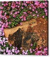 Wallflowers 3 Acrylic Print