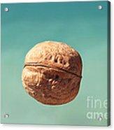 Walnut. Acrylic Print